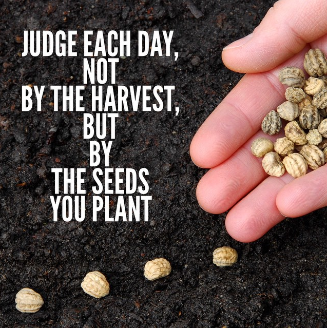 *JudgeDailySeedsYouPlant.PNG